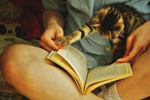 livros-da-muffin
